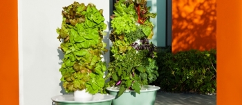 Watch a Tower Garden Grow